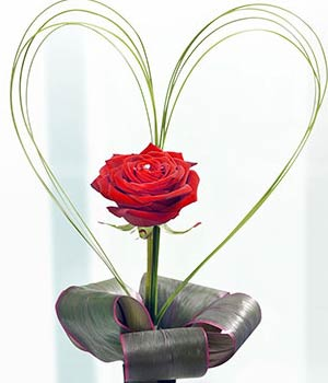 deep red rose in a sleek black vase with steel gra