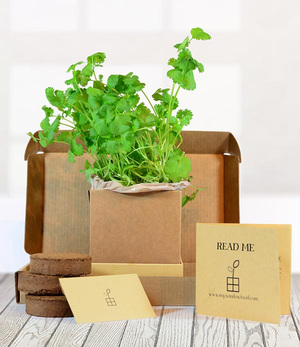 Coriander Grow Kit