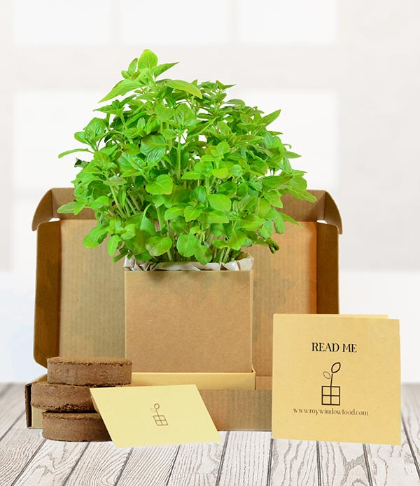 Greek Basil Grow Kit