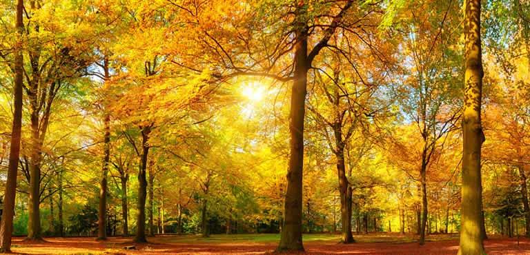 Autumn Flowers - Teleflorist